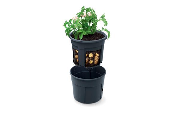 Maceta con estructura para cultivar tomates